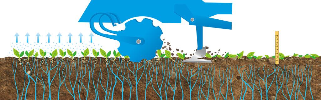Illustration Zwischenfruchtanbau