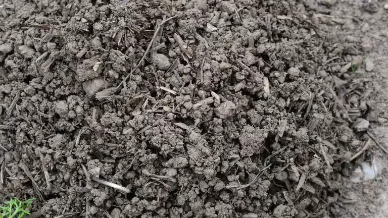 Bodenbearbeitung fruchtbare Bodenkruüel