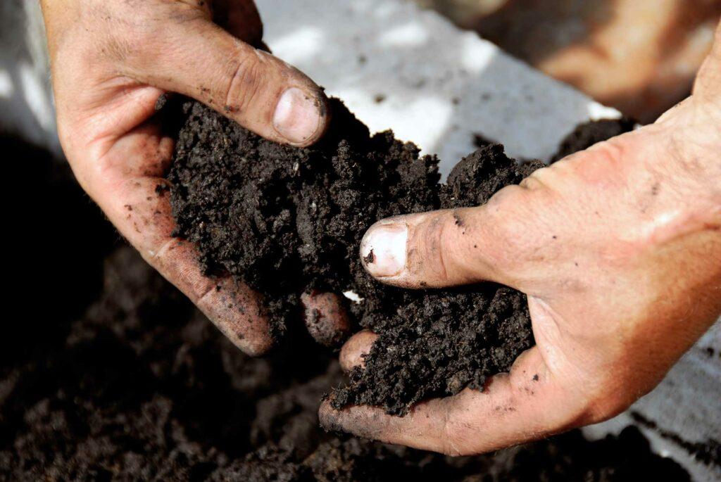 Bodenfruchtbarkeit Humus